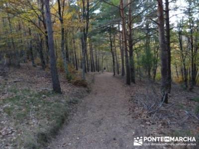 Rutas Senderismo, Parque Natural del Hayedo de Tejera Negra; ruta pedriza; montaña madrid